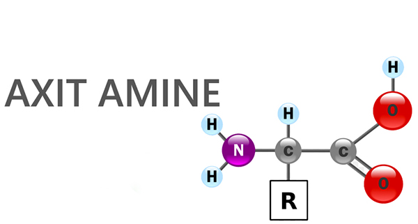 mô hình cấu tạo của Axit amine