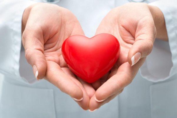 Sâm Ấn Độ có tác dụng tốt với tim mạch