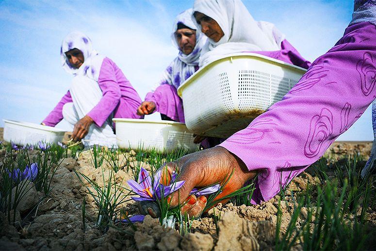 sale off 30% saffron royal afghan